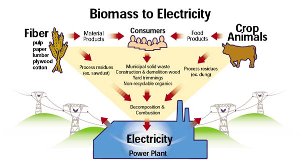 Biomass to Electricity