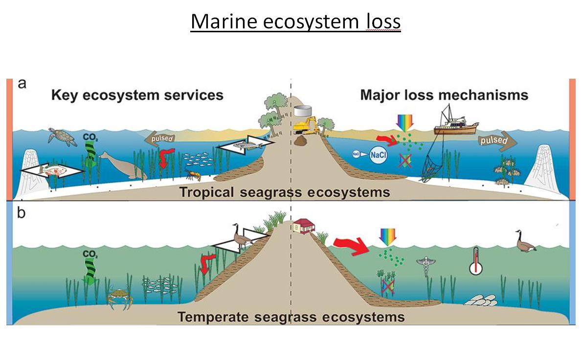 Marine ecosystem loss