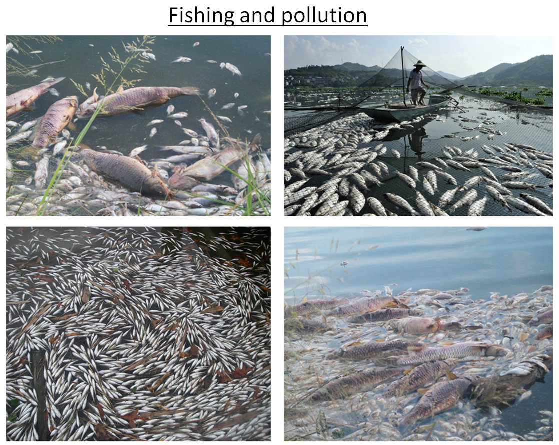 Fishing and pollution