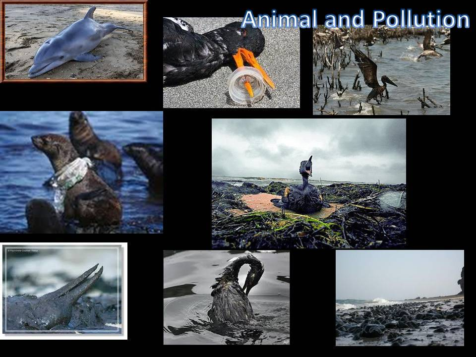 animal and pollution