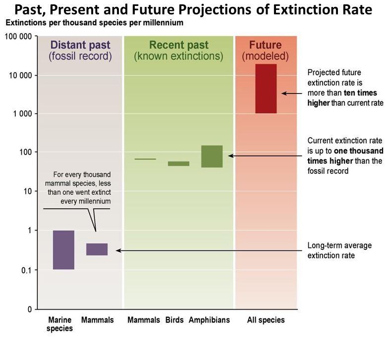 Past, Present and Future Projection of Extinction Rate