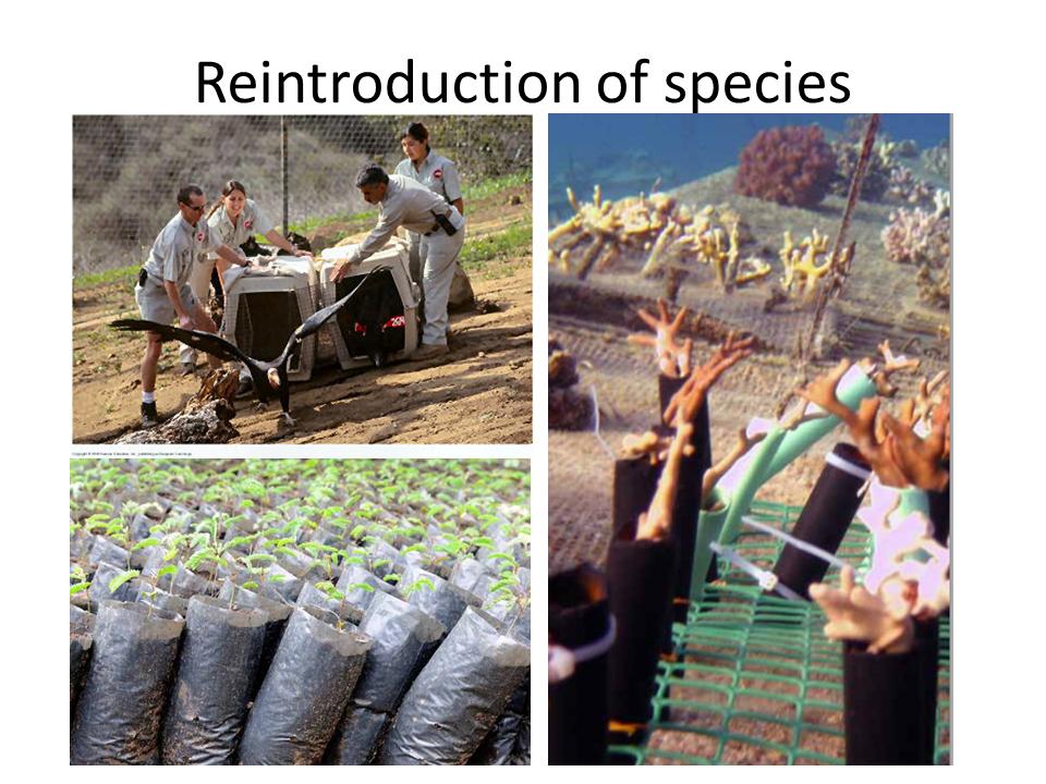 Reintroduction of species