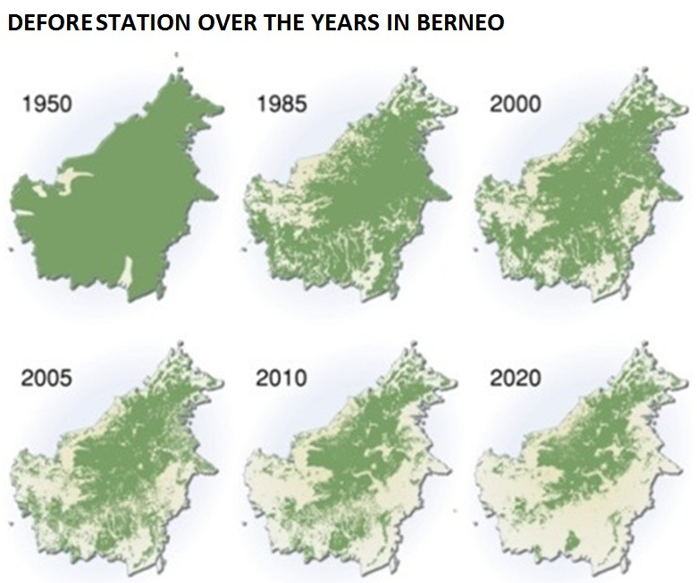 Deforestation over the years in Borneo