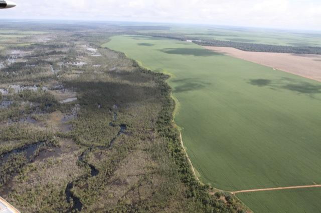 Amazon reforestation