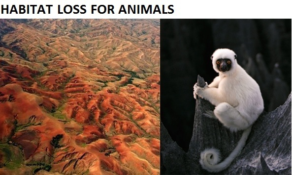 Habitat loss for animal