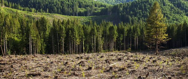 China's Reforestation Programs: Big Success or Just an Illusion?