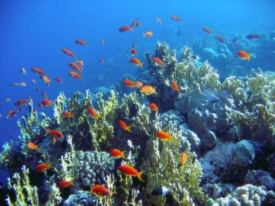 Corals 'Could Survive a More Acidic Ocean'