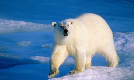 Arctic oil rush will ruin ecosystem, warns Lloyd's of London