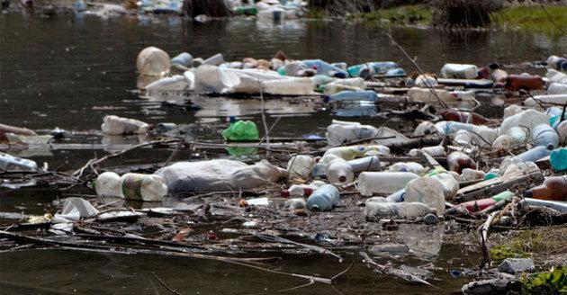 Dutch researchers invent a process to turn plants into plastics