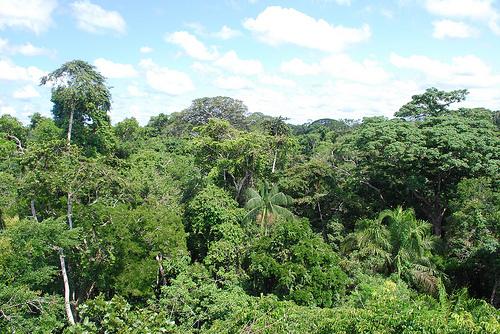 Rising Ocean Temperatures Prime Amazon Rainforest for Fire