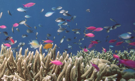 The Global Partnership for Oceans is a political boost for the world's over-fish