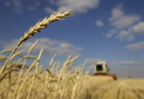 Extreme heat hurts wheat yields as world warms-study